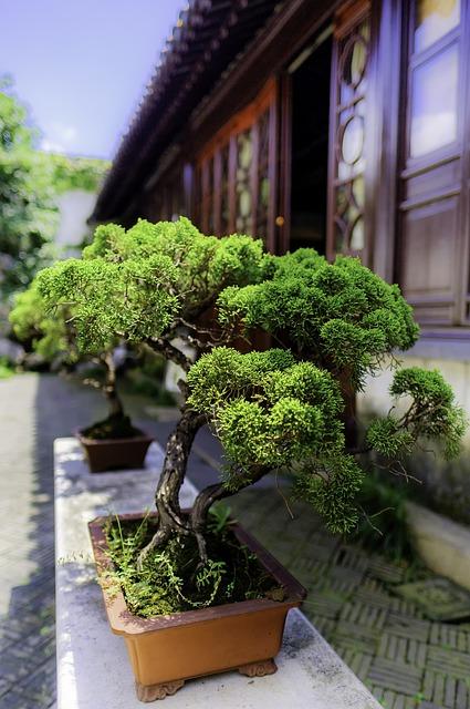 Bonsai- sztuka ogrodników z Dalekiego Wschodu