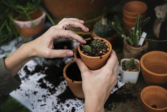Prawdy i mity o ogrodzie